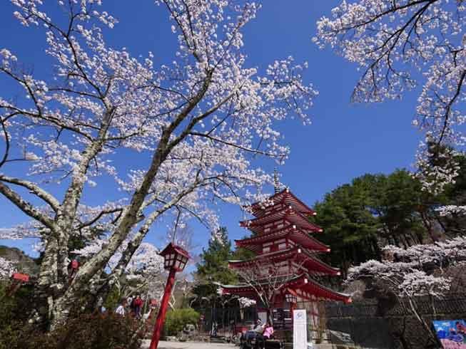 東京新倉山淺間公園必去景點