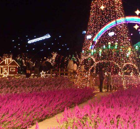 足利花卉公園一日遊行程
