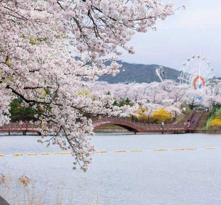 首爾出發韓國櫻花團兩日一夜遊行程