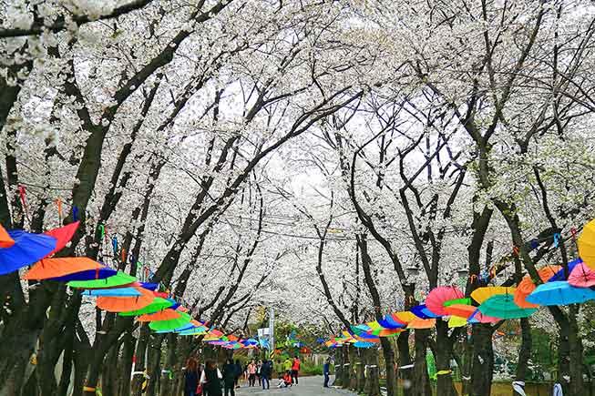 首爾陶唐山櫻花必去景點