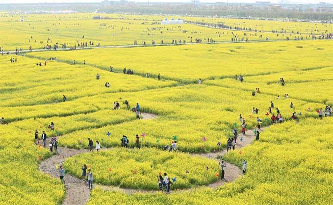 釜山大渚生態公園油菜花必去景點