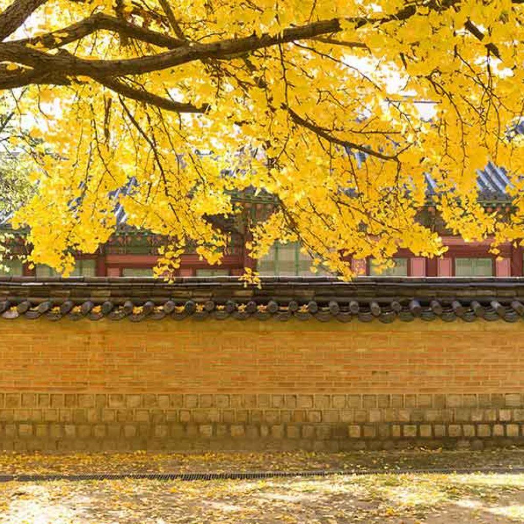 韓國紅葉景點-德壽宮石牆路