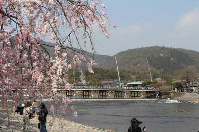 京都嵐山櫻花必去景點