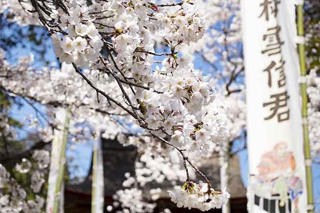 東京惠林寺必去景點