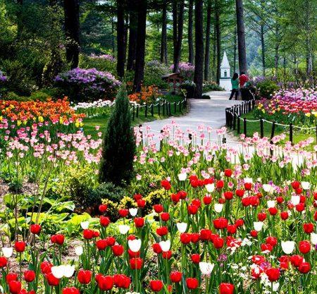 晨靜樹木園一日遊行程