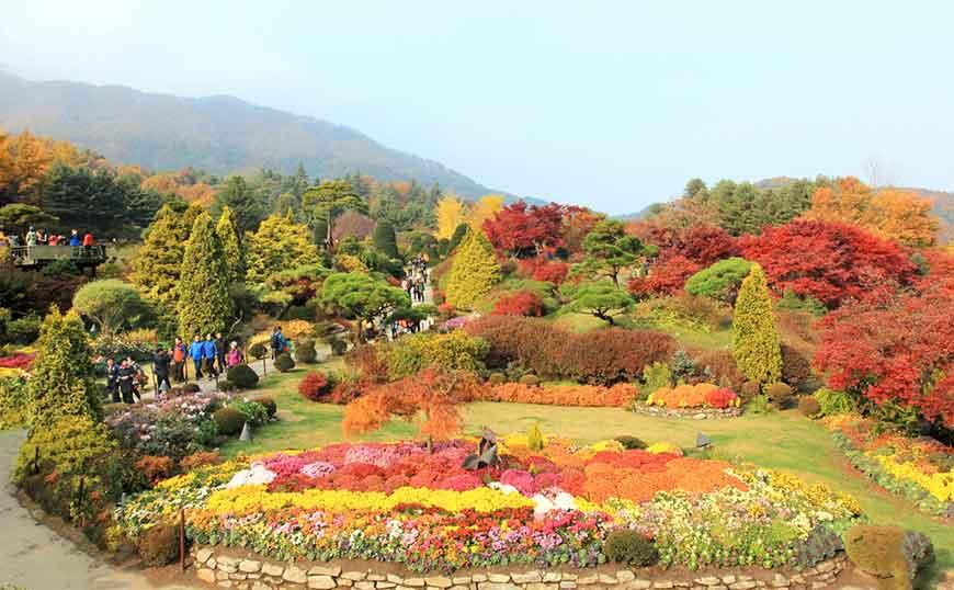 韓國紅葉景點-晨靜樹木園
