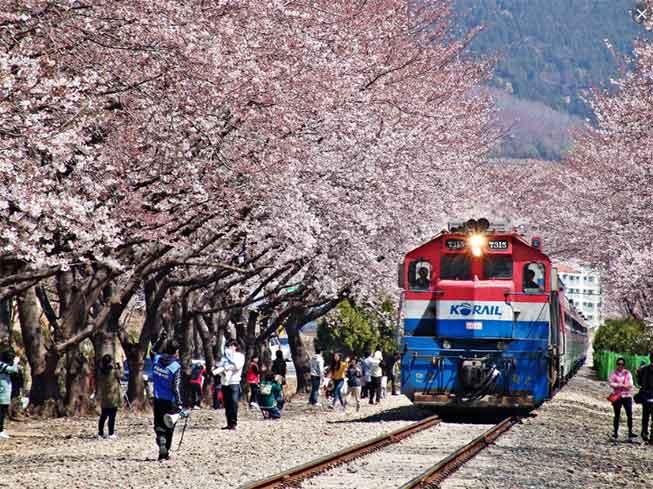 鎮海慶和火車站櫻花必去景點