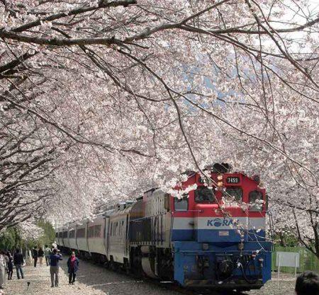 鎮海慶和火車站櫻花一日遊行程
