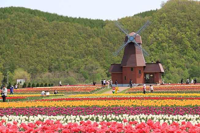 北海道上湧別鬱金香公園必去景點