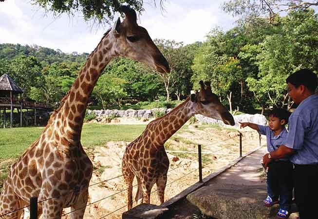 綠山動物園必去景點
