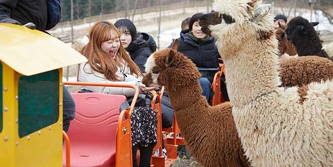 韓國草泥馬樂園必去景點