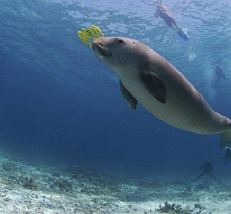 美人魚島浮潛一日遊行程
