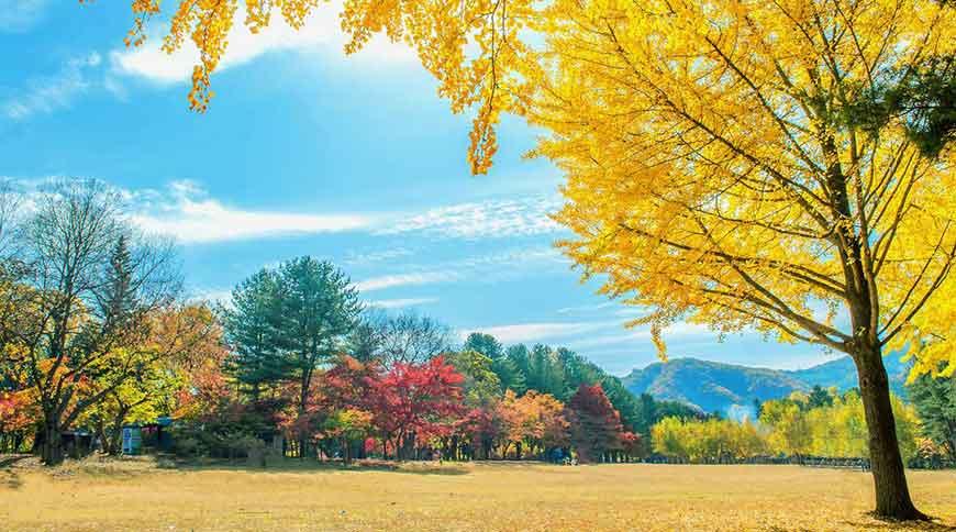 韓國紅葉景點-南怡島
