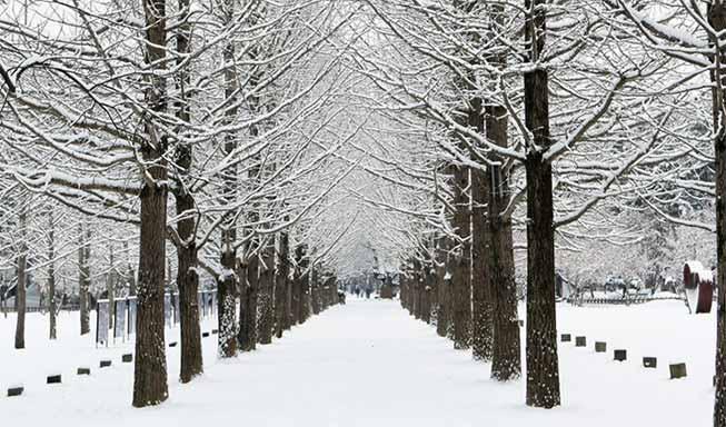 南怡島冬季必去景點
