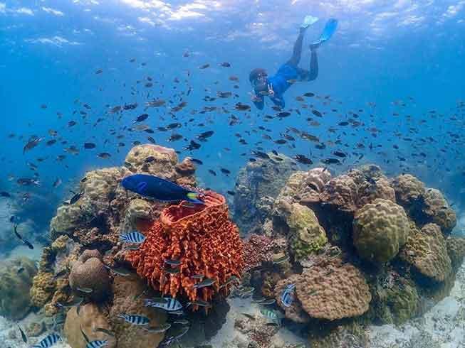 芭堤雅尼莫島Nemo Island浮潛必去景點