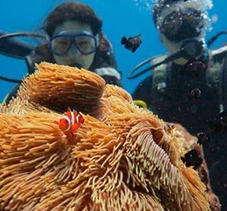 皇帝島體驗潛水