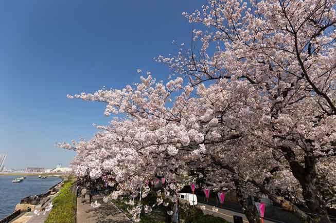 東京隅田公園必去景點