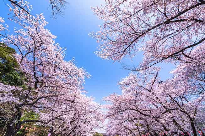 東京上野公園必去景點
