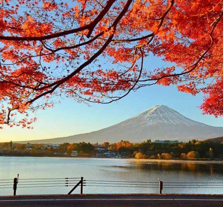 山中湖紅葉一日遊行程