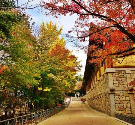 慶州佛國寺紅葉一日遊行程