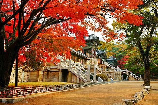 慶州佛國寺紅葉必去景點
