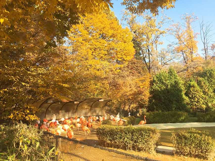 韓國紅葉景點-首爾大公園